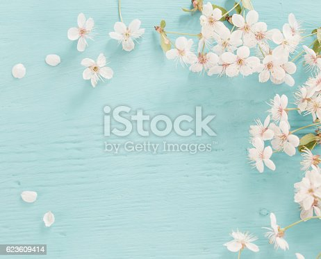 istock Flowers of cherry on a wooden background 623609414