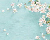 Flowers of cherry on a wooden background