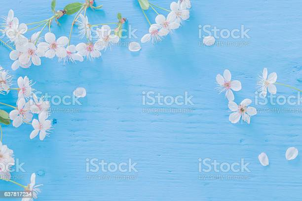 Flowers of cherry on a wooden background picture id637817234?b=1&k=6&m=637817234&s=612x612&h=hhc4bms28yzjwvepen5yj0czgzkbcceixqrvqaowgxu=