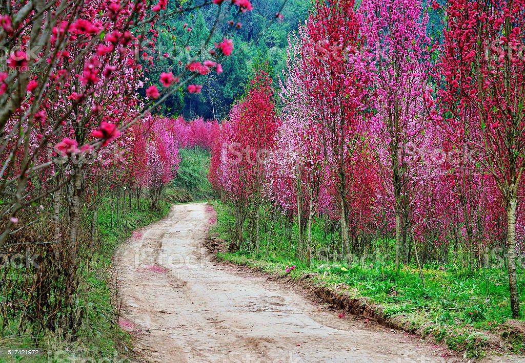 Flores de estradas - foto de acervo