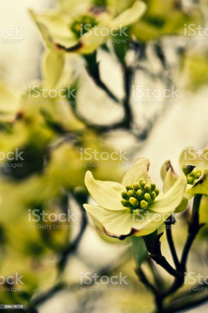 Flowers of Dreamland 3 stock photo