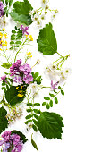istock Flowers of hawthorn and lilacs scattered on one side on a white background. 693168868