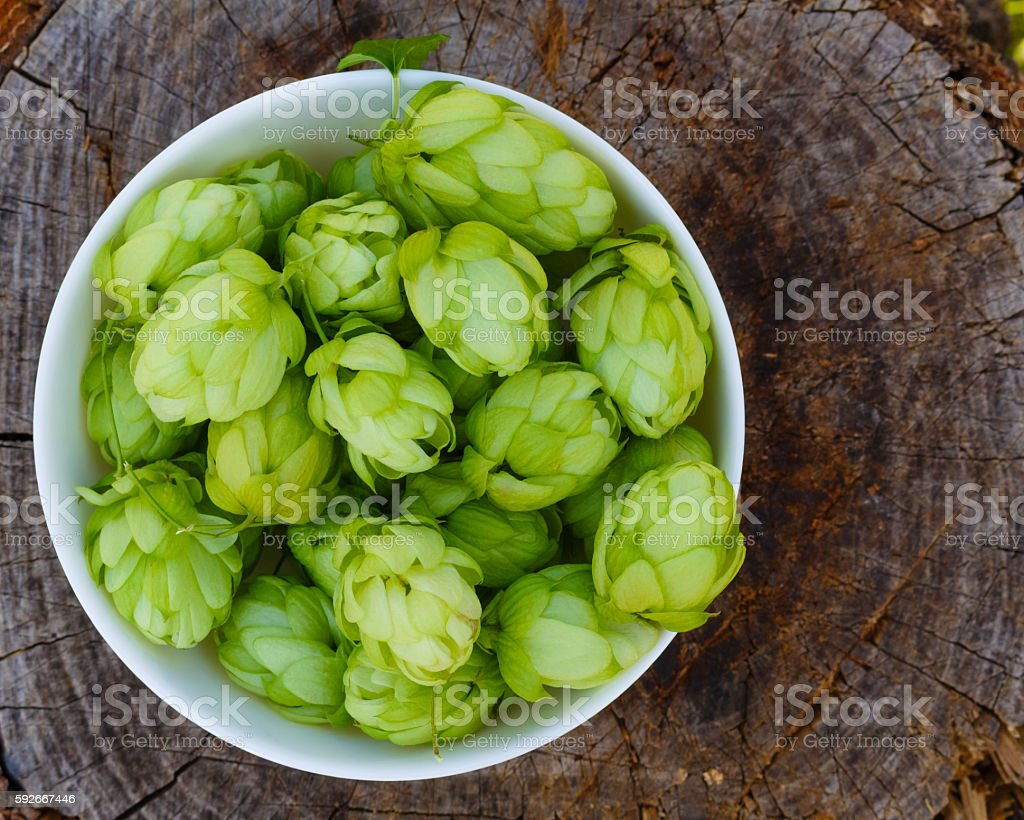 flowers of hops in white bowl on old wooden background stock photo