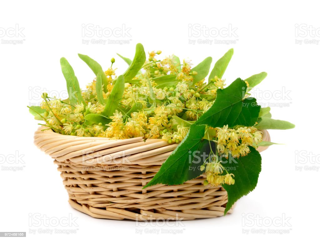 Flowers Of Linden In A Basket On A White Background Flower Tea From