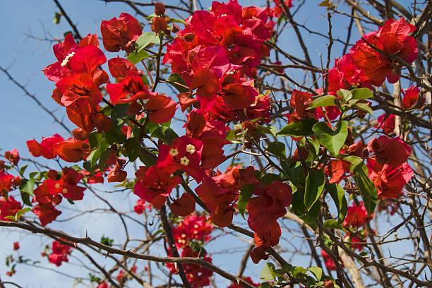 Blumen von Los Gatos Beach – Foto