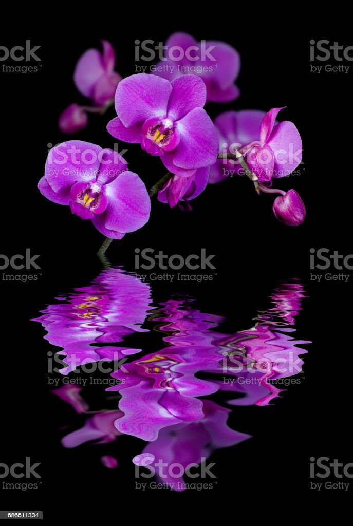Flowers of orchids royalty-free stock photo