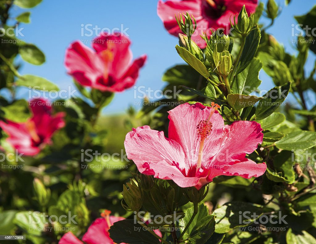 Flowers of paradize stock photo