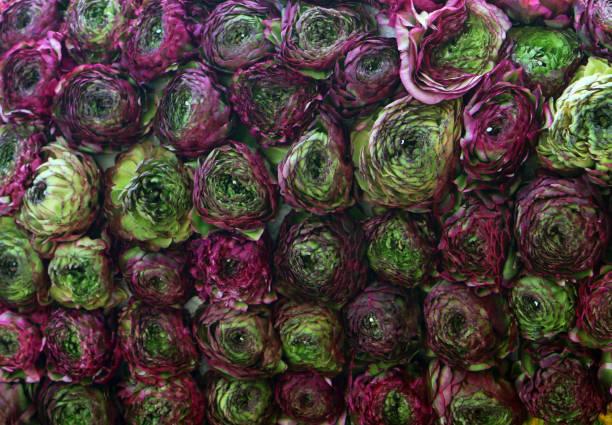 Blumen von Ranunculus in Blumenwand angeordnet – Foto