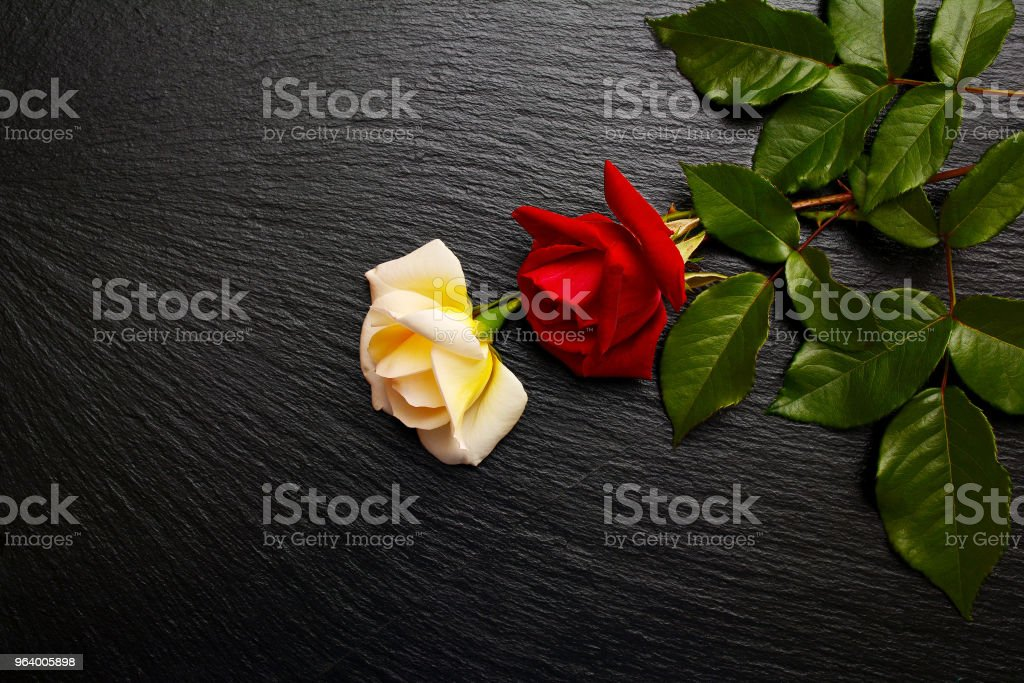 Flowers of red and  white roses on black slate board, plate, tray. Hybrid tea roses with delicate petals. - Royalty-free Backgrounds Stock Photo