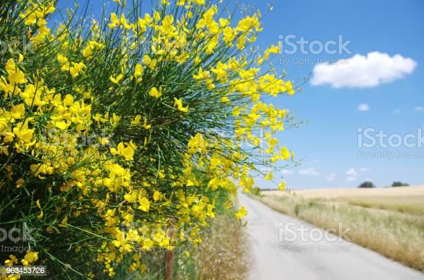 Eski Road Yakınındaki Vahşi Katırtırnağı Çiçekler Stok Fotoğraflar & Ağaç Çiçeği'nin Daha Fazla Resimleri
