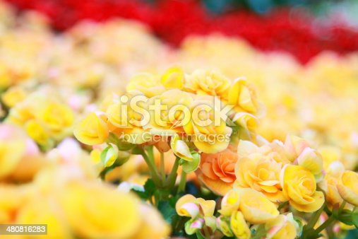 flowers of yellow