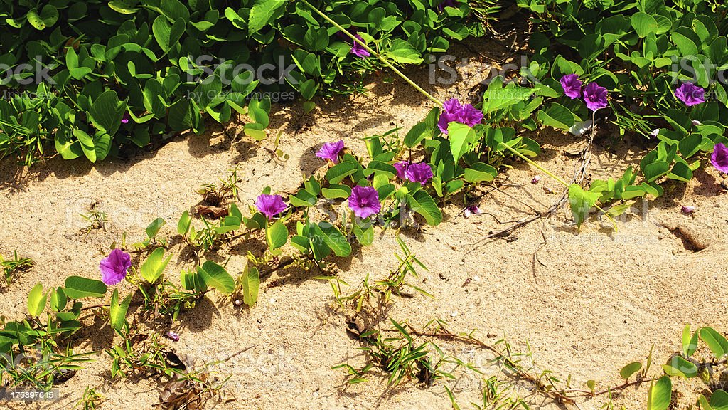 Flowers on a Beach royalty-free stock photo
