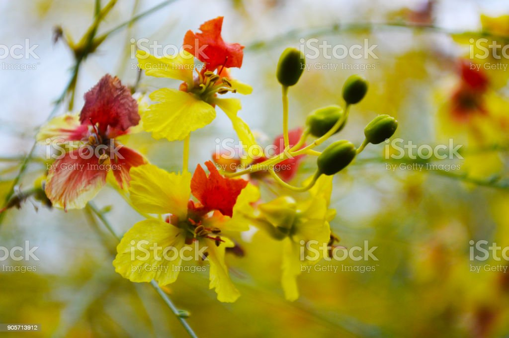 Flowers on a blooming tree royalty-free stock photo