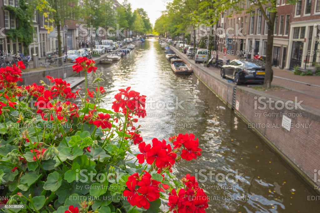 Flowers on a bridge at a canal in Amsterdam, the Netherlands stock photo