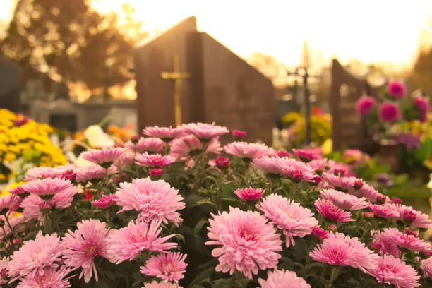 flowers on a cemetery - cemetery stock photos and pictures