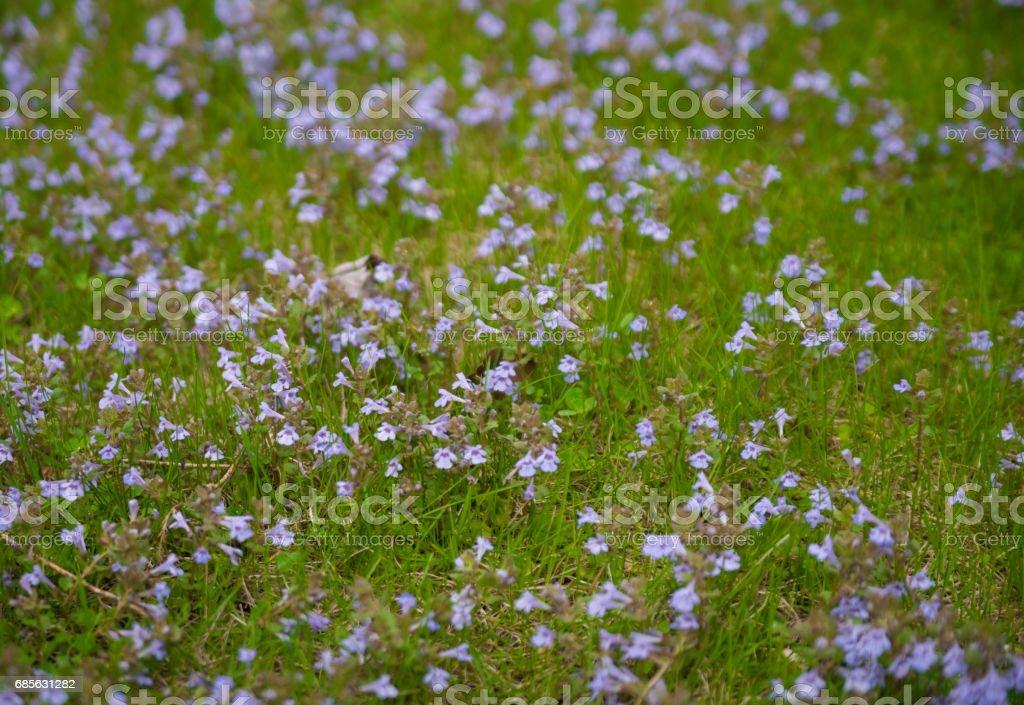 草地上的花朵 免版稅 stock photo