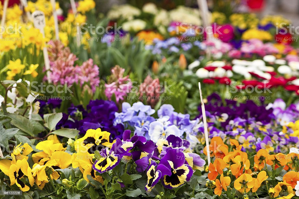 flowers on a market royalty-free stock photo