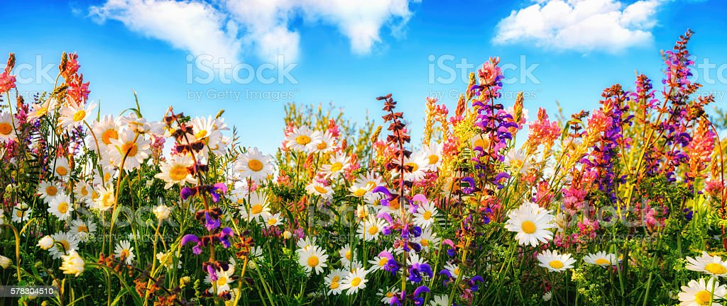 Flowers on a meadow and the blue sky stock photo