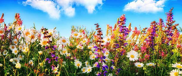 Flowers on a meadow and the blue sky – Foto