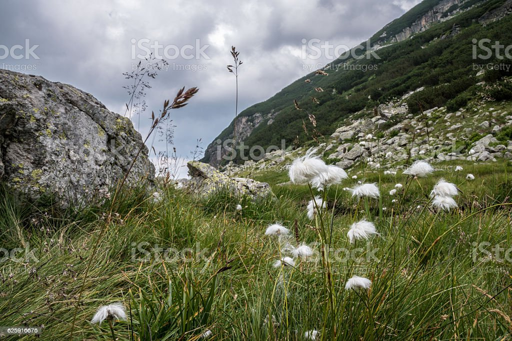 Flowers on a mountain slope stock photo