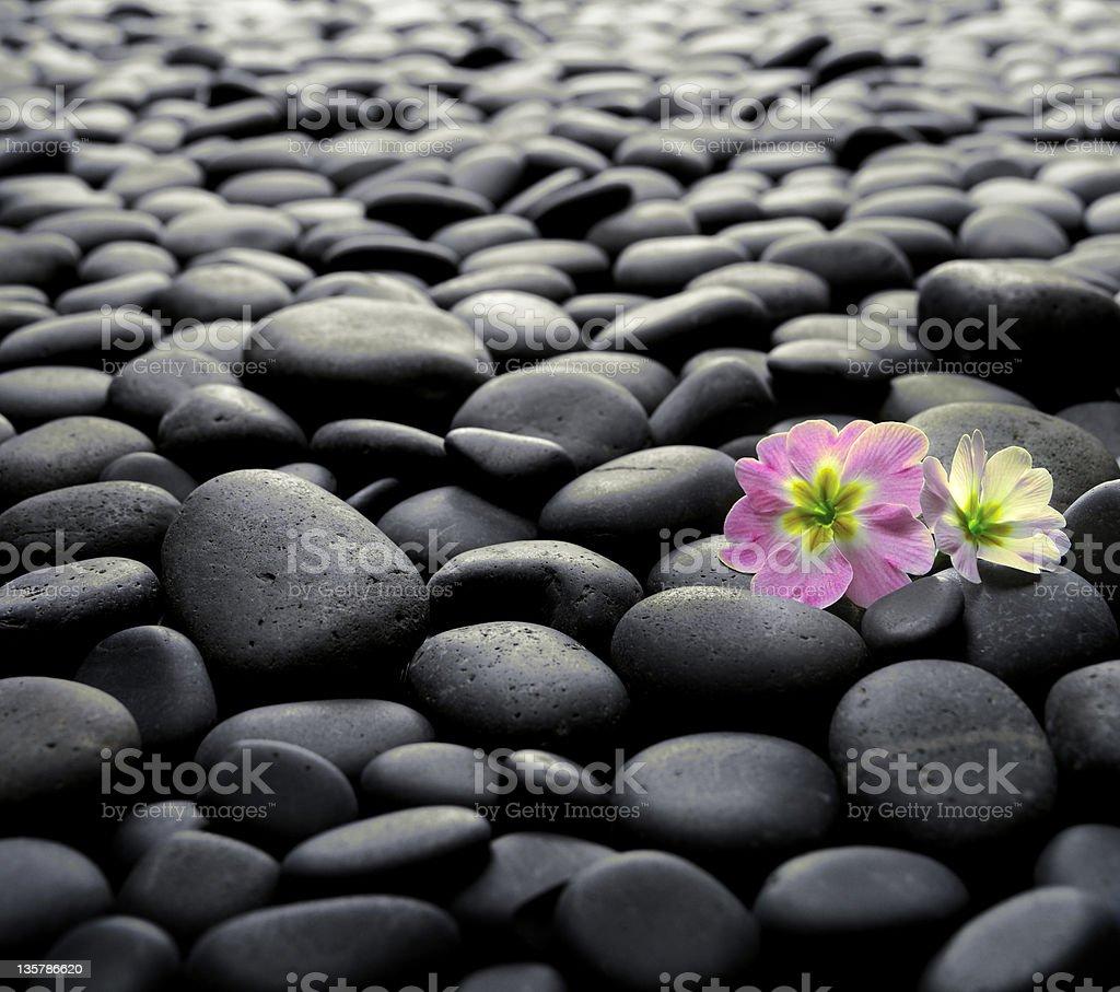 Flowers on a rocky shoreline royalty-free stock photo