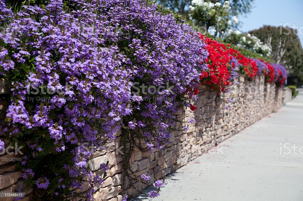 Flowers on a stone fence royalty-free stock photo