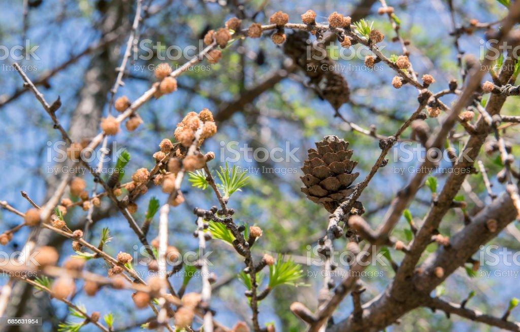 木の花 ロイヤリティフリーストックフォト