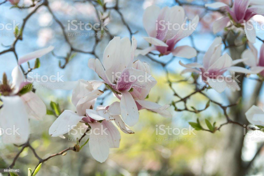 꽃 트리 royalty-free 스톡 사진