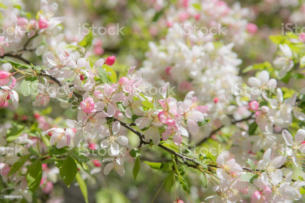 Flowers on a tree royalty-free stock photo