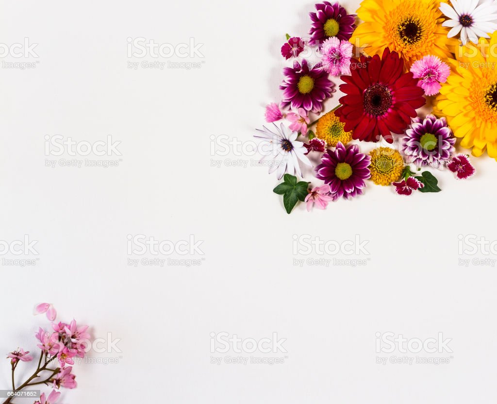 Flowers on a white board with space for copy stock photo