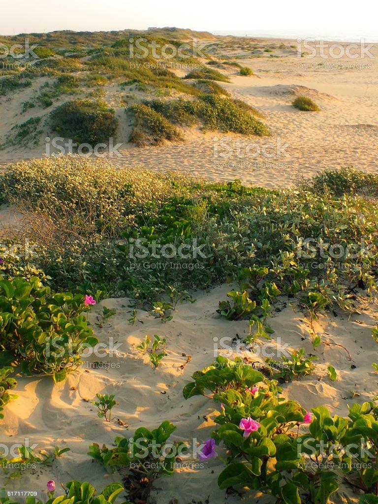 Flowers on Beach stock photo
