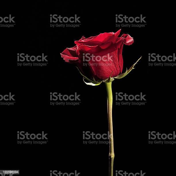 Flowers on black with copy space series red rose picture id155598594?b=1&k=6&m=155598594&s=612x612&h=09lqjxx6tyqpw5y6rk4ep7budjffqxdtx7rxijmsz3u=