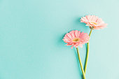 istock Flowers on blue background 1125757938
