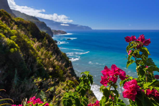 Flowers on coast in Boaventura - Madeira Portugal stock photo