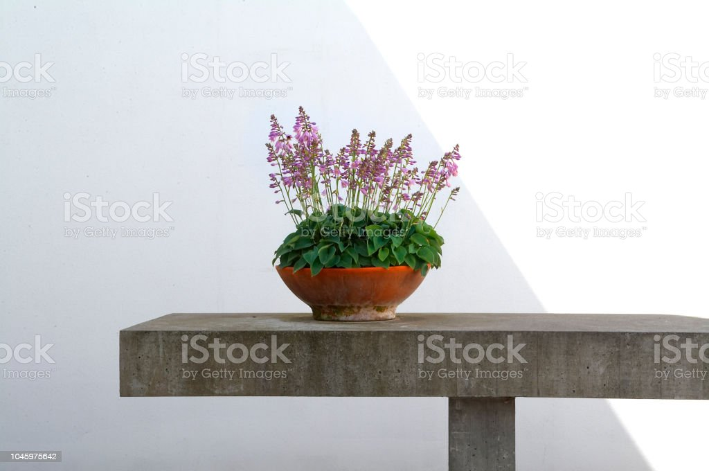 Flowers on concrete table stock photo