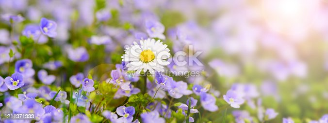 istock flowers on field with lens flare and sunbeams 1211371333