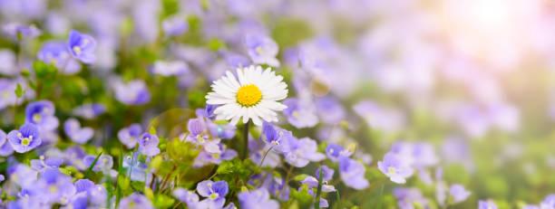 Blumen auf dem Feld mit Linsenfackel und Sonnenstrahlen – Foto