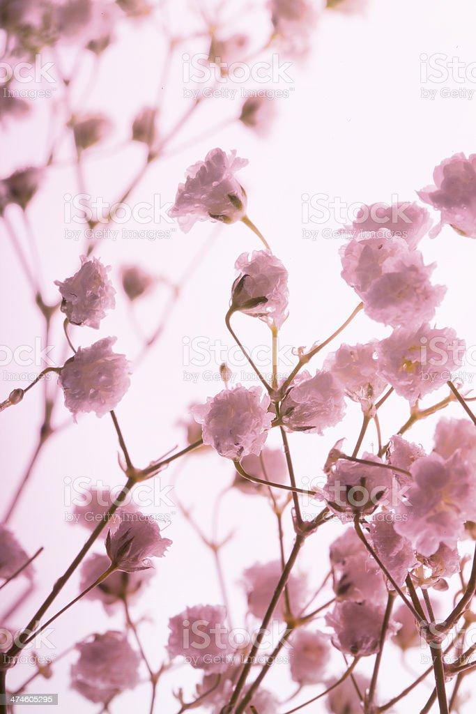 Flowers on glittering background stock photo