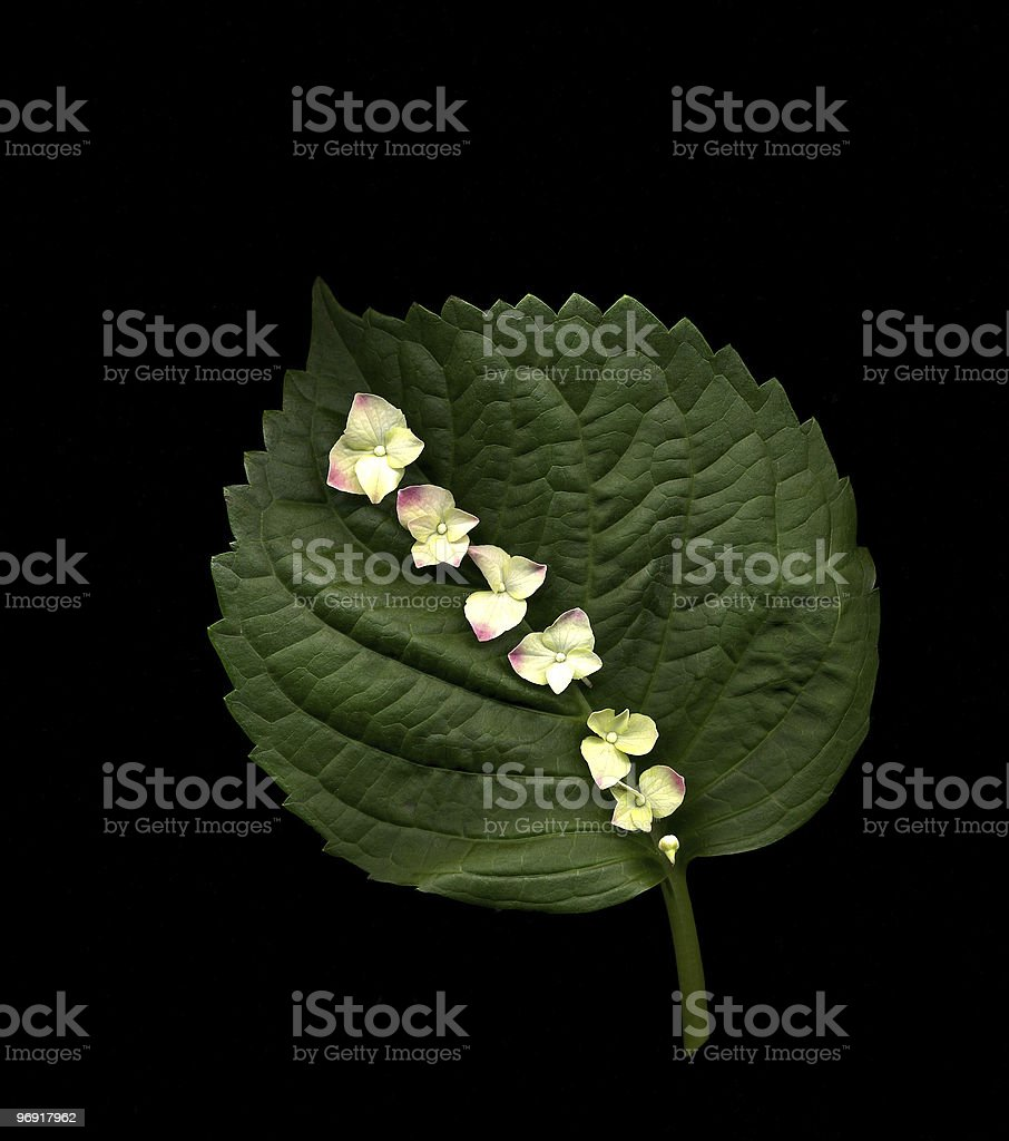 Flowers on Green Leaf royalty-free stock photo