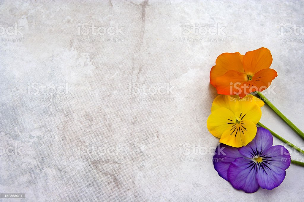flowers on  Grunge  textured marble flowers on light gray Grunge  textured marble background  with copy space Backgrounds Stock Photo