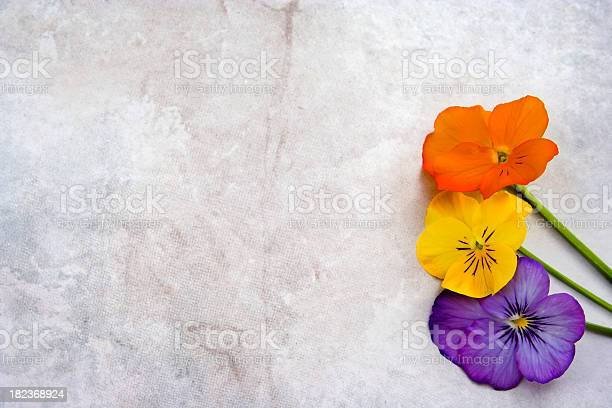 Flowers On Grunge Textured Marble Stock Photo - Download Image Now