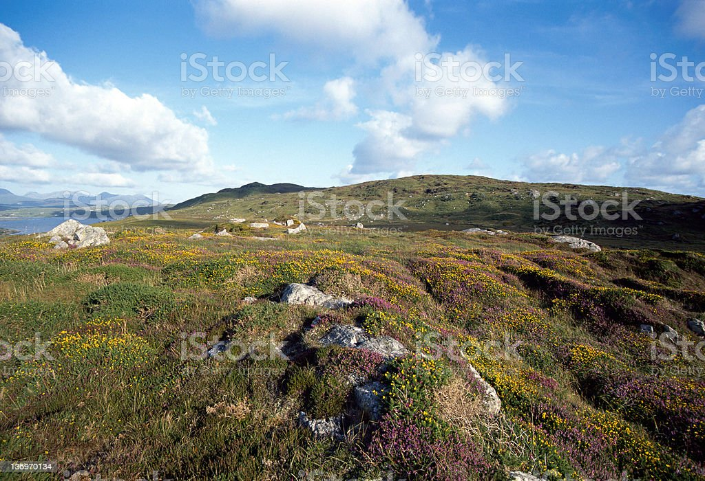 Flowers on hill and mountains near clifden - Ireland stock photo