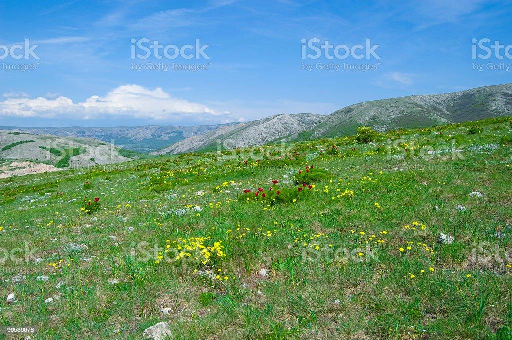 Kwiaty na hill - Zbiór zdjęć royalty-free (Bez ludzi)