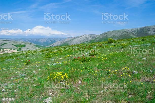 Kwiaty Na Hill - zdjęcia stockowe i więcej obrazów Bez ludzi