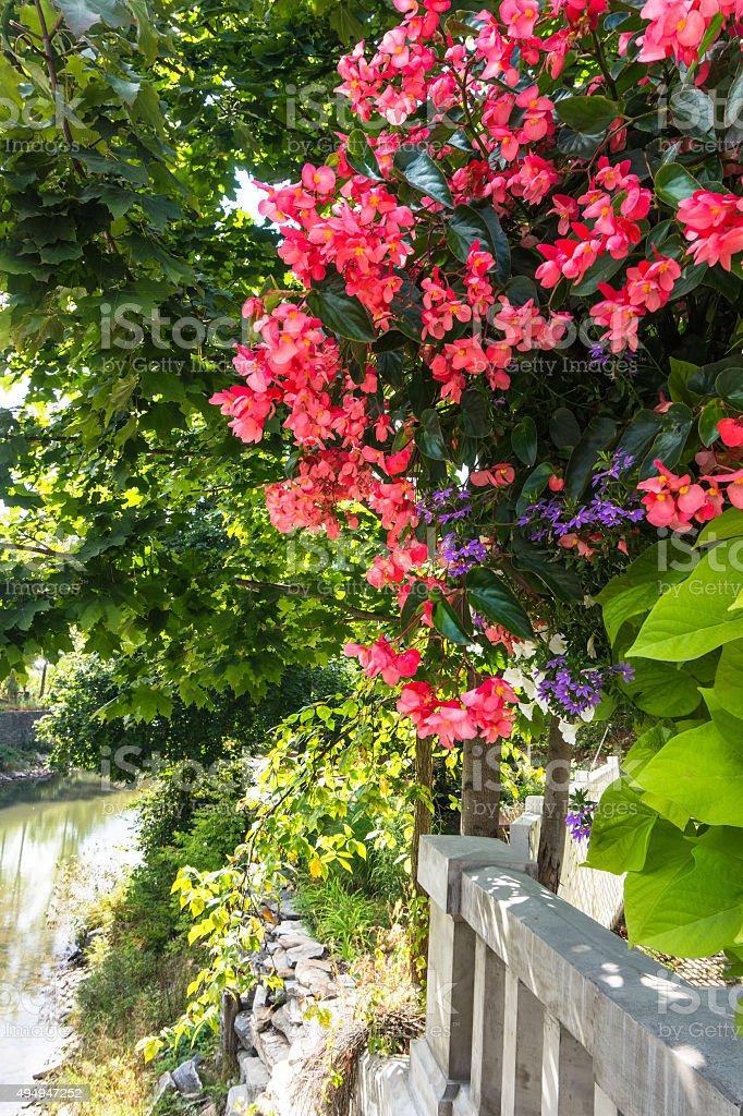flowers on riverside stock photo