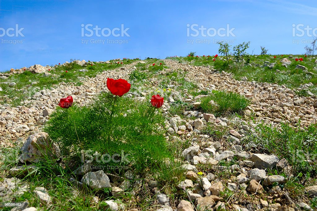 flowers on road royalty-free stock photo