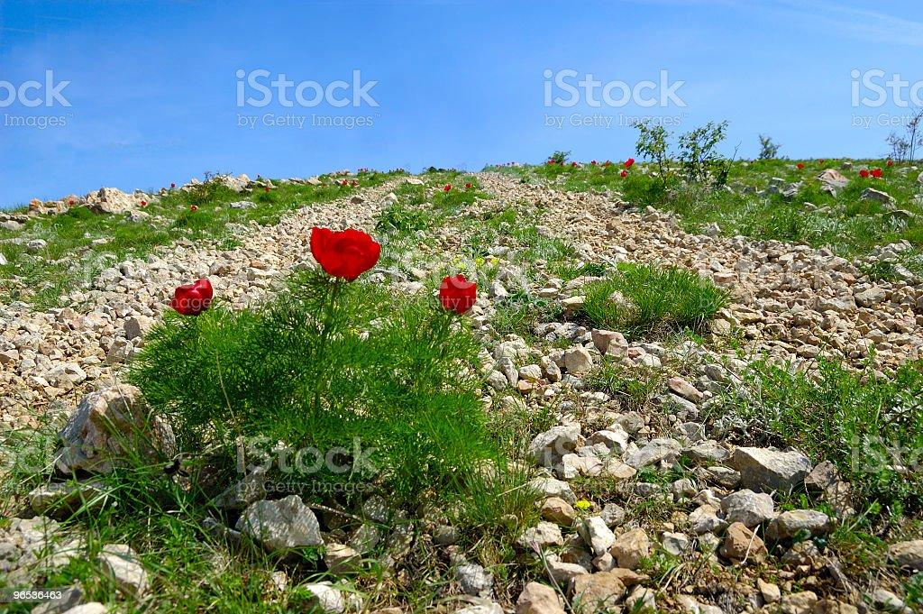 Kwiaty na road zbiór zdjęć royalty-free