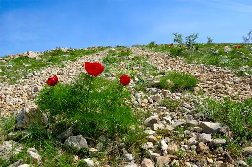 꽃이 도로 0명에 대한 스톡 사진 및 기타 이미지