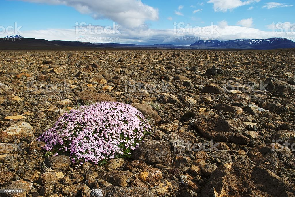 Flowers on rocky ground stock photo