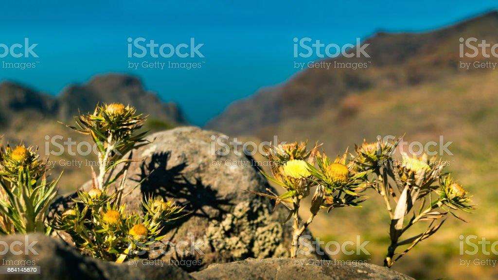 flowers on stones royalty-free stock photo